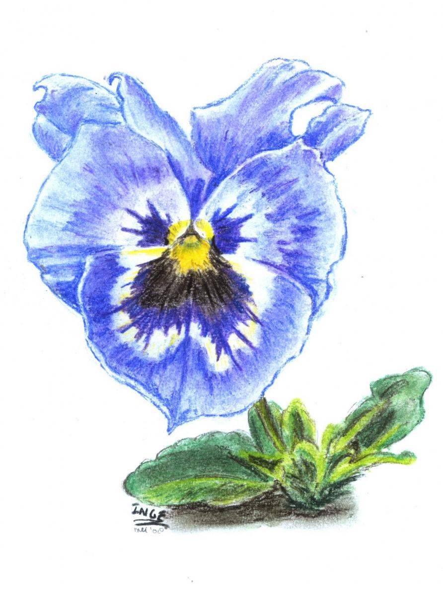 bloemviooltje
