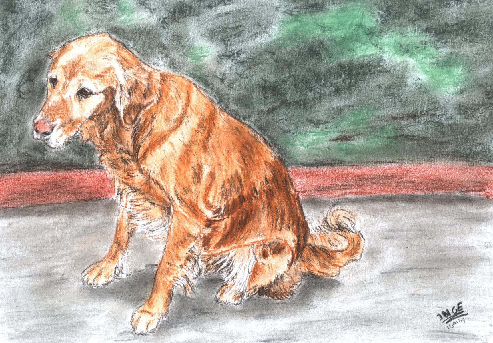 hond-de-nooijer