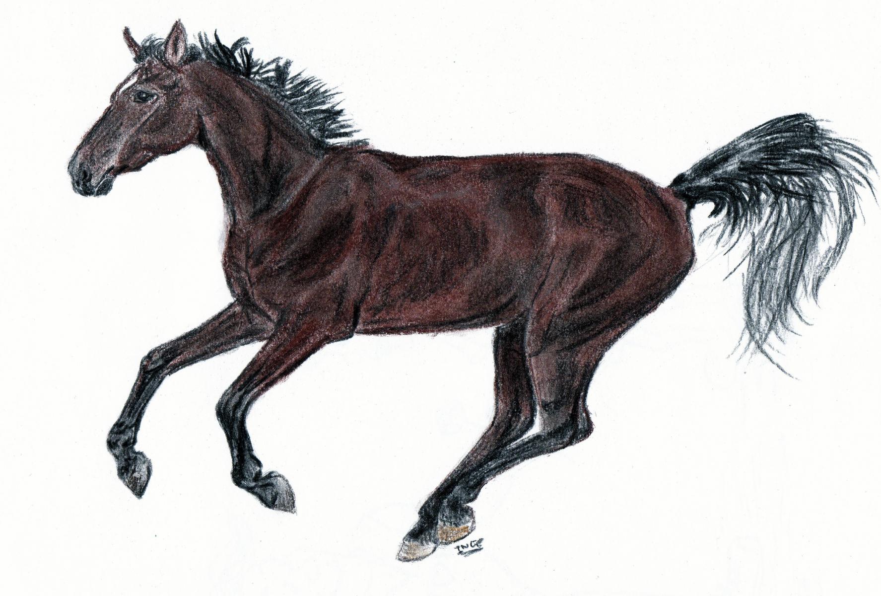 logopaard