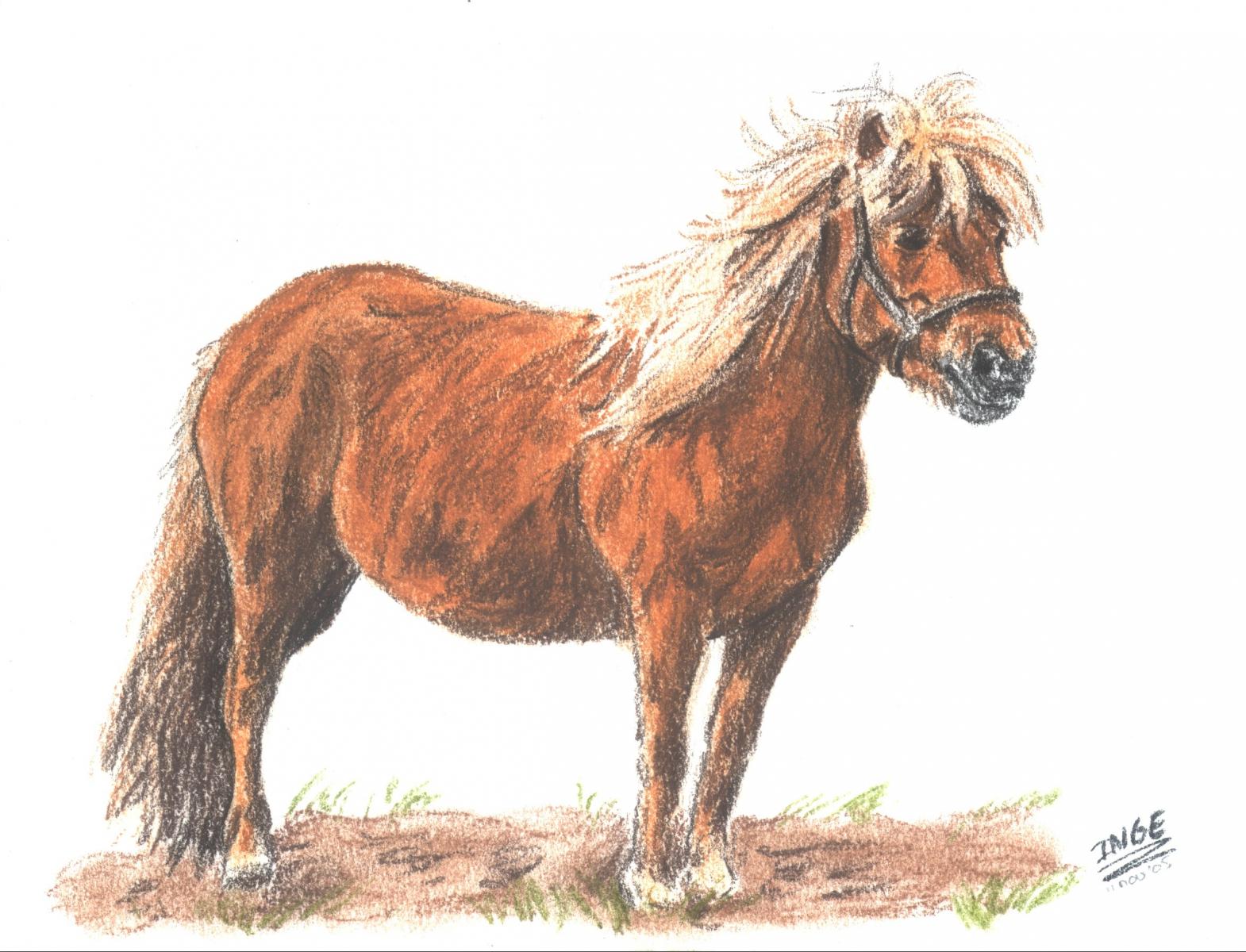 paard-111105