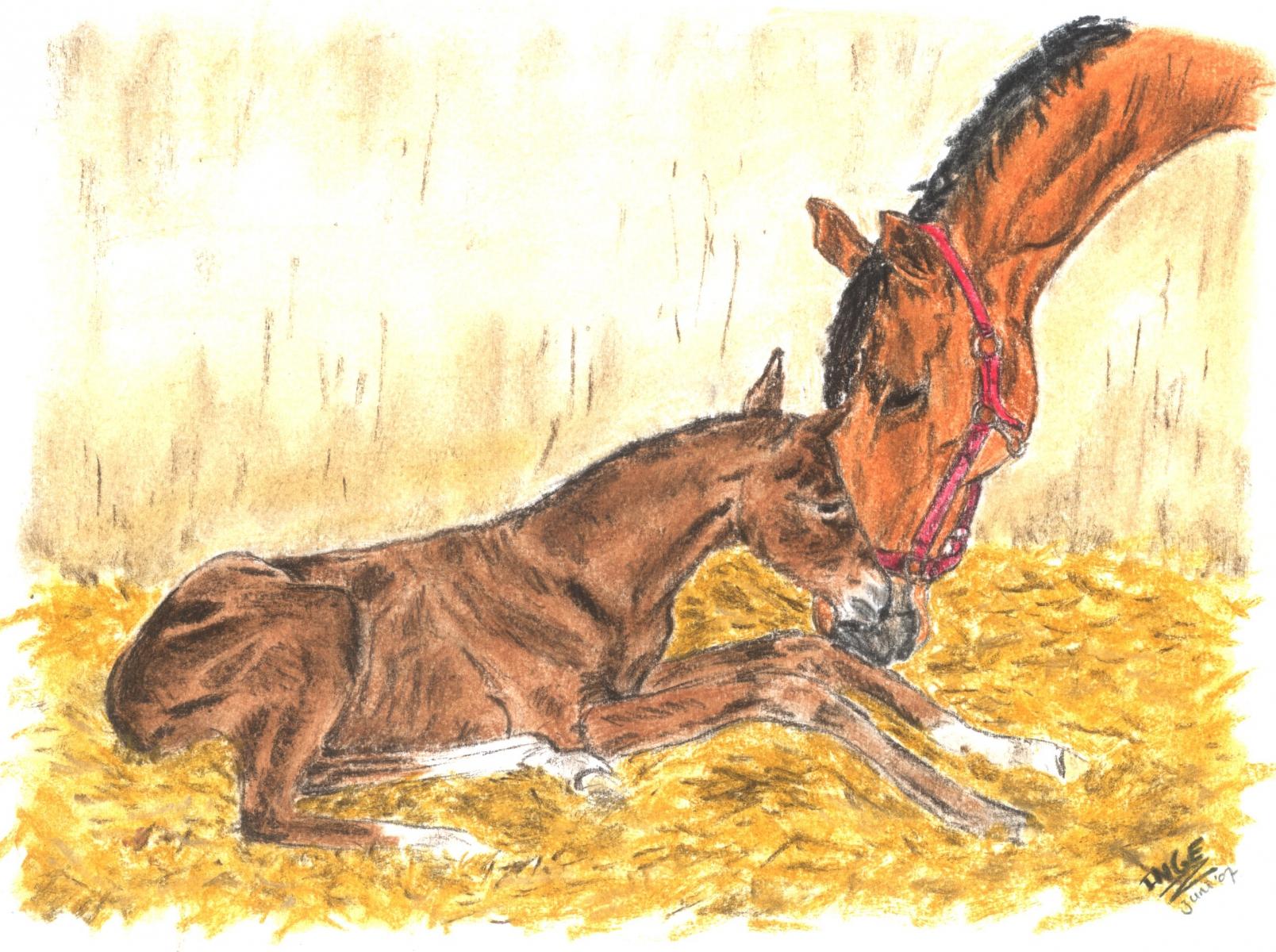 paard-en-veulen-16-juni-2007