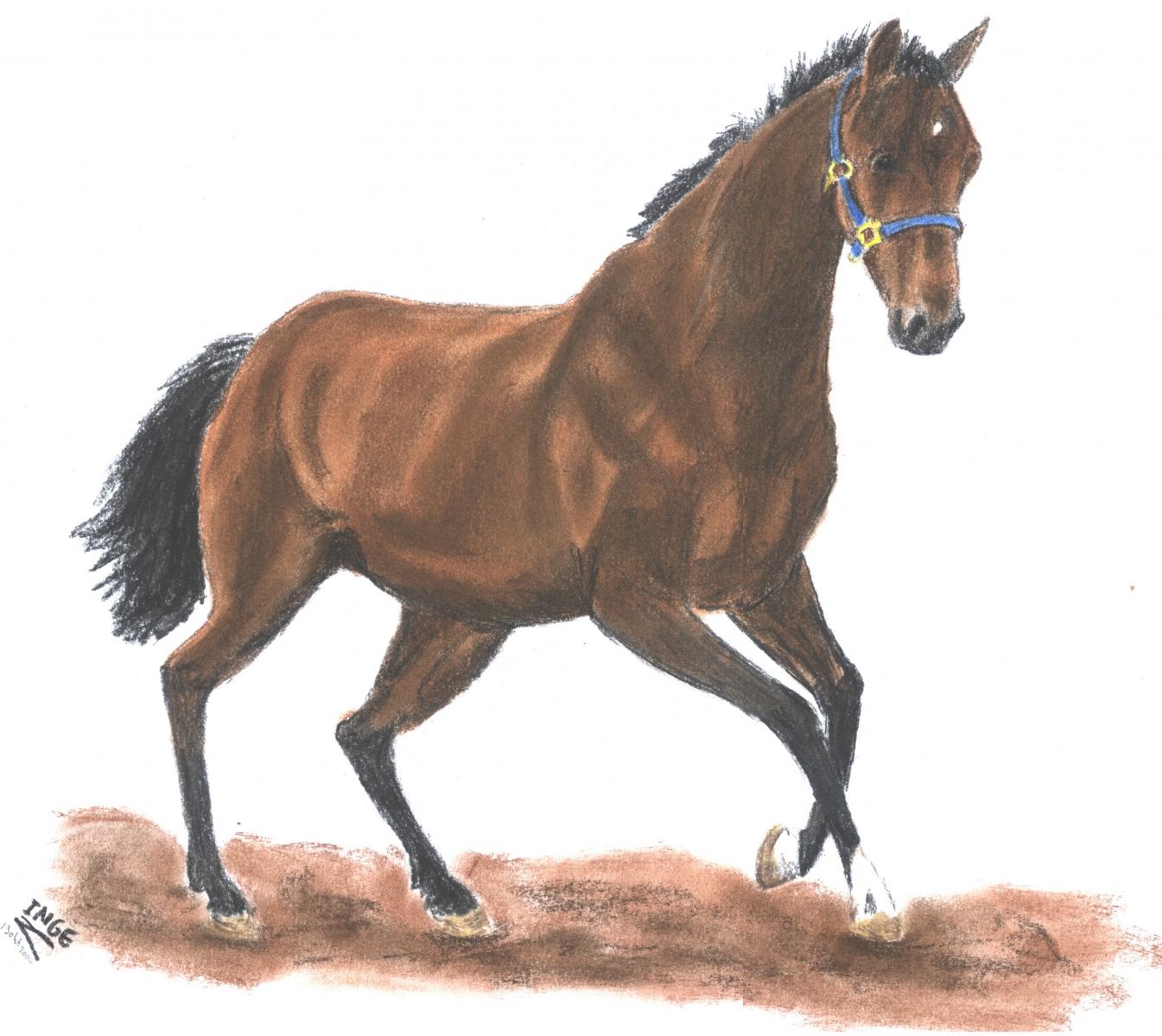 paard-okt-2