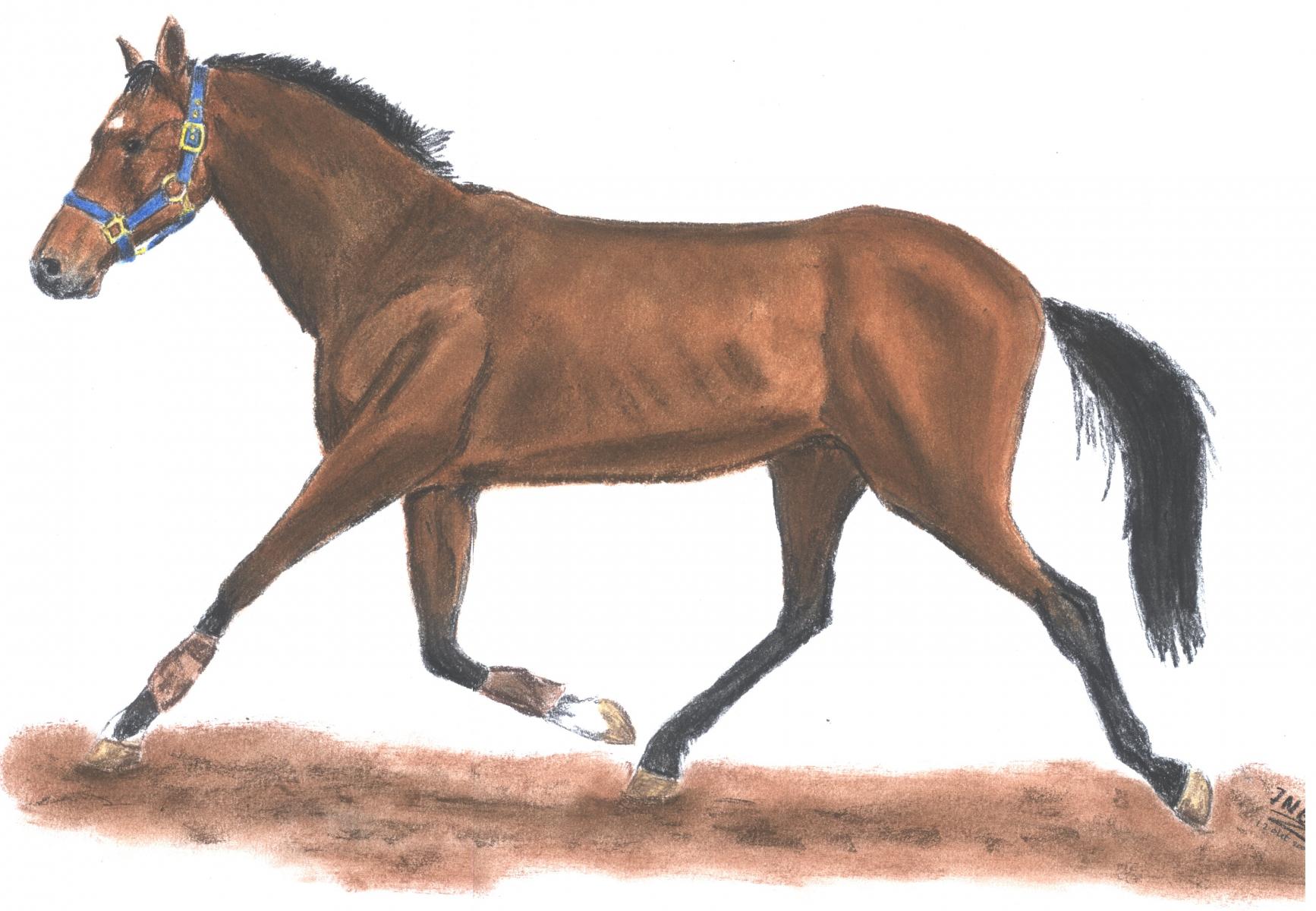 paard-okt-3