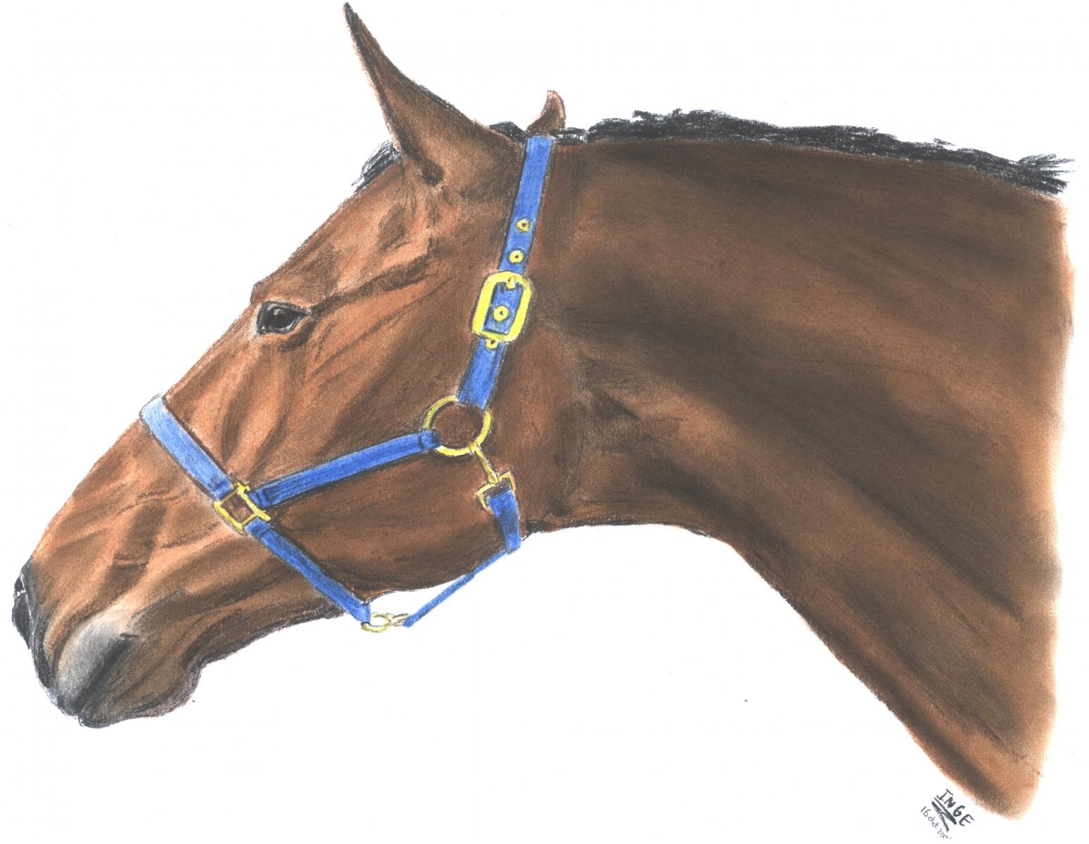 paard-okt-4