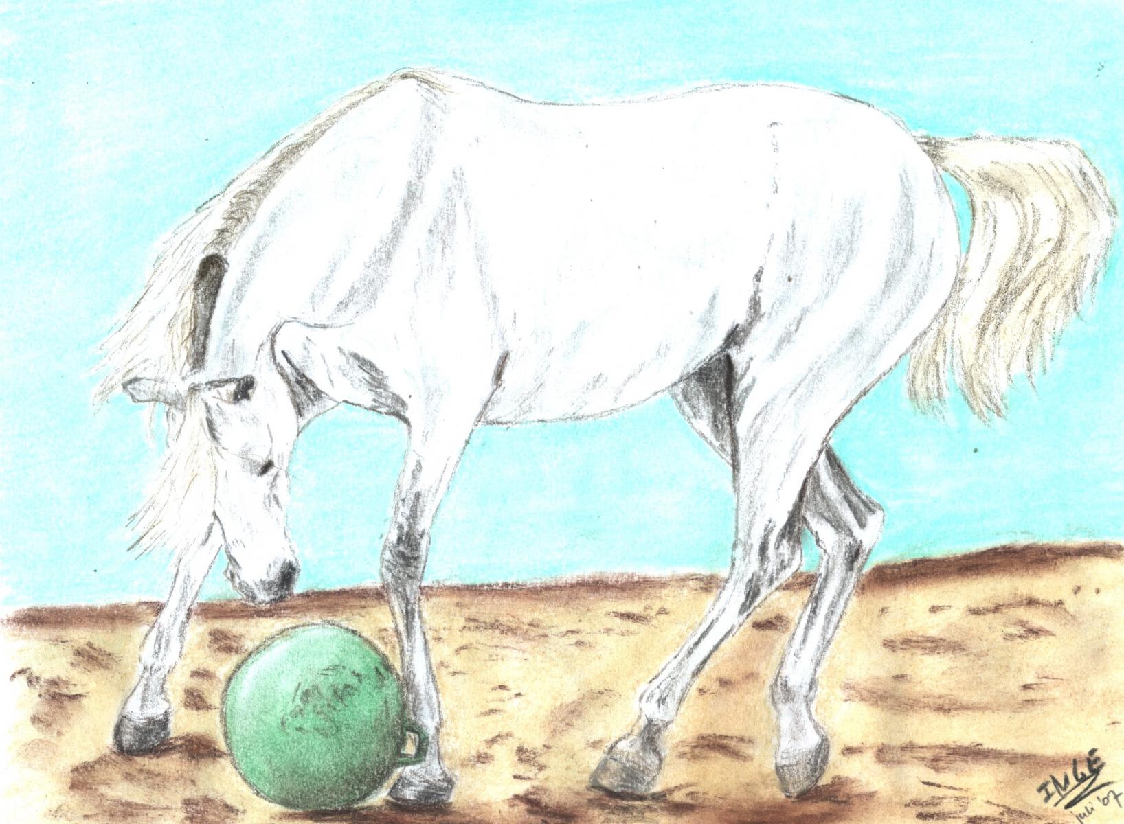 paardmetbal