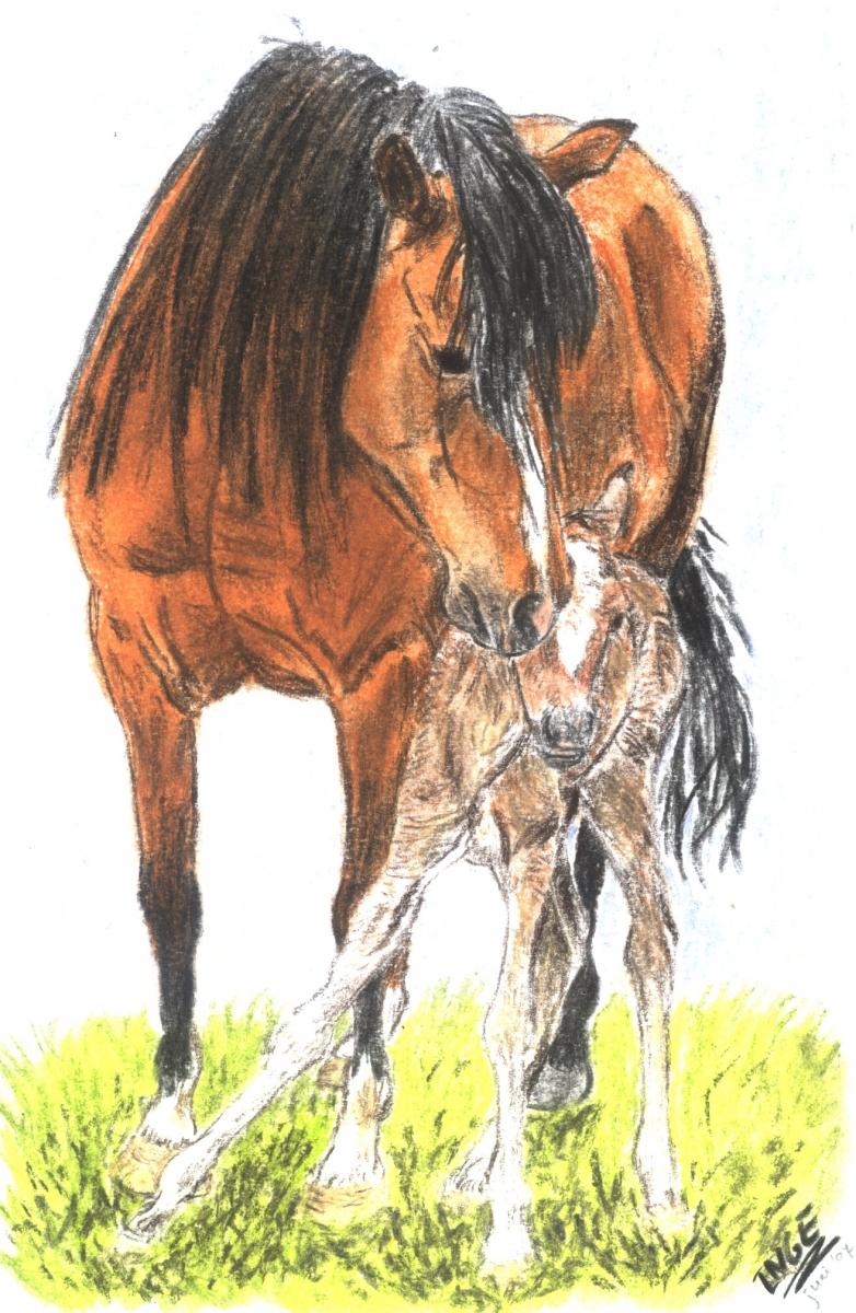 paardveulen2