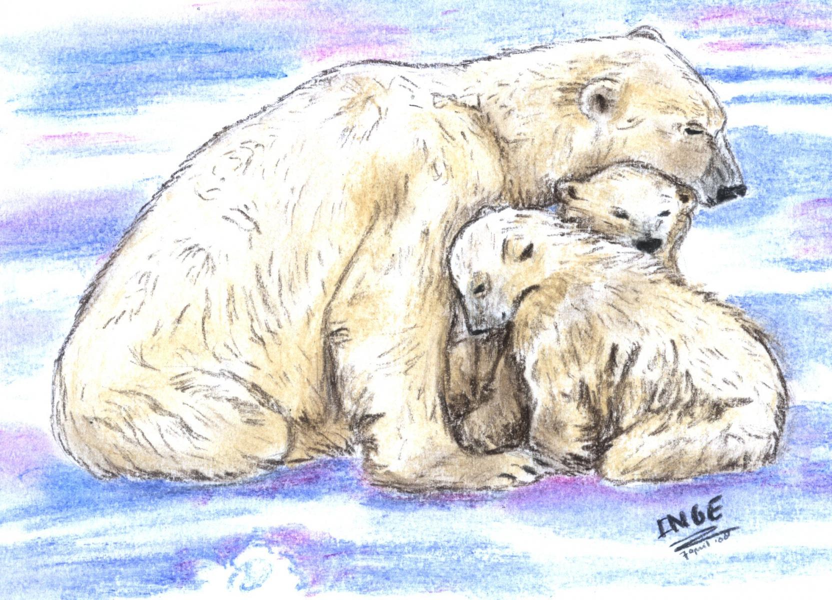 ijsberen3