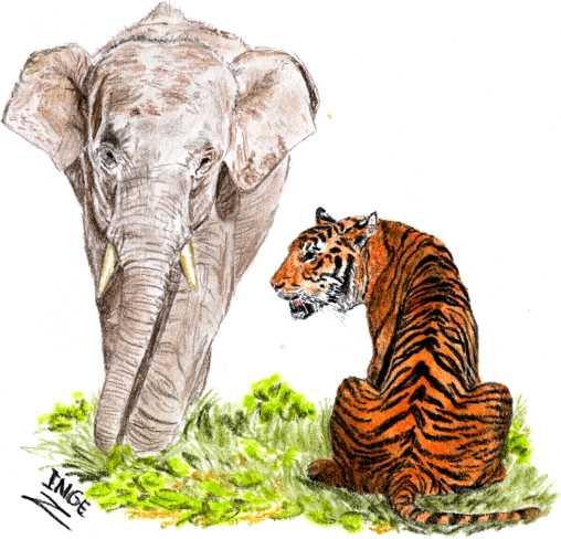 olifant-en-tijger2