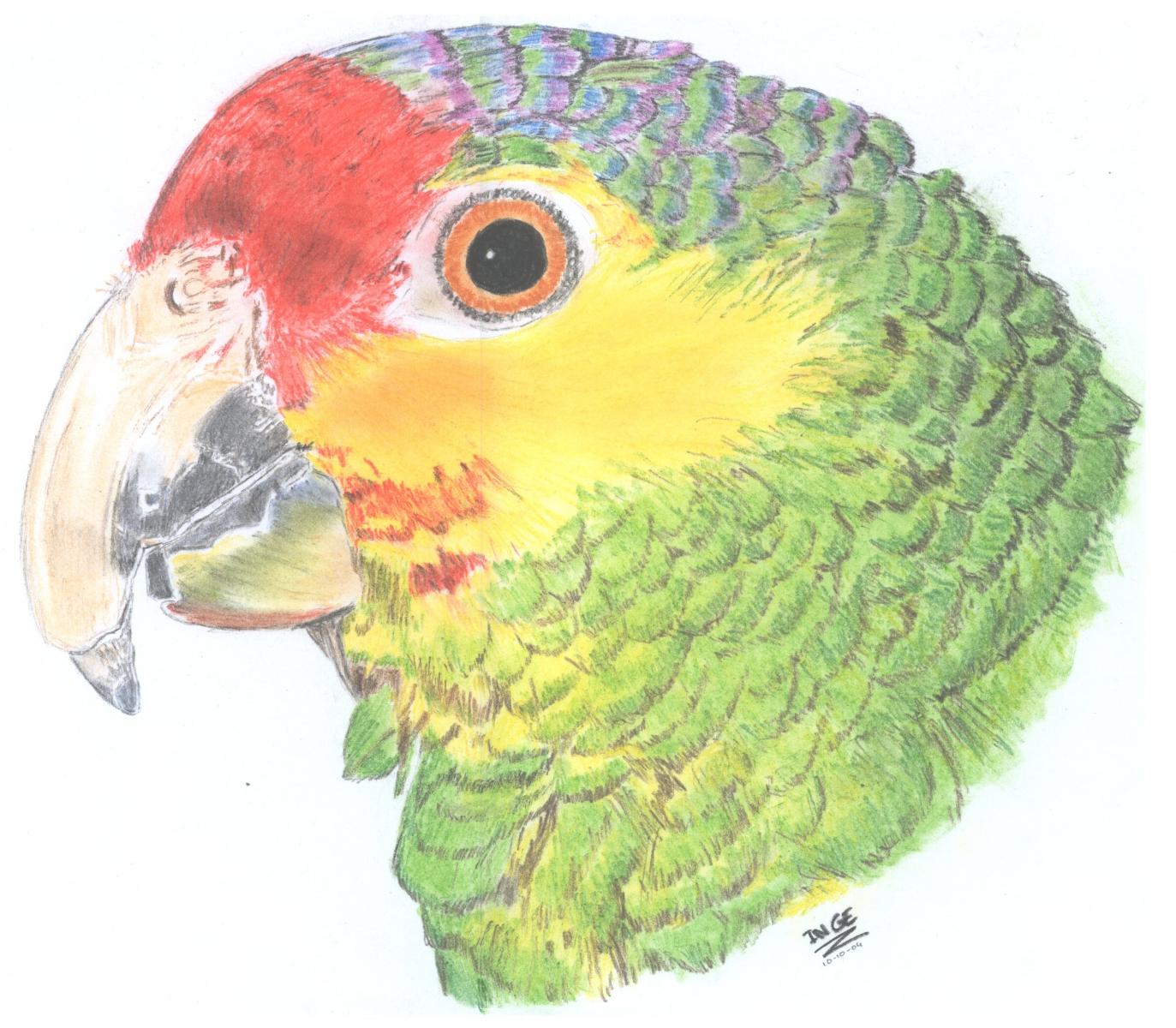 papegaaij