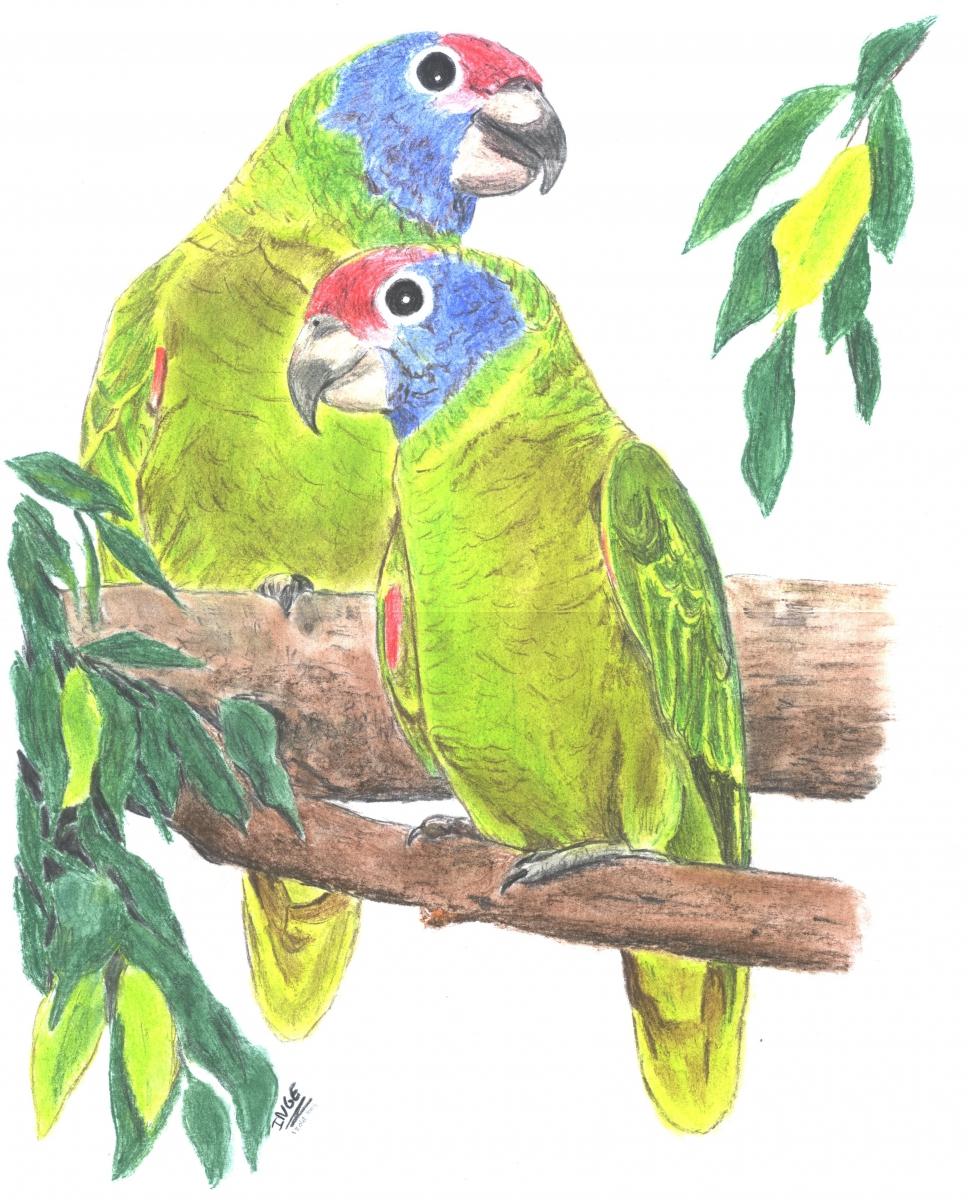 papegaaijen
