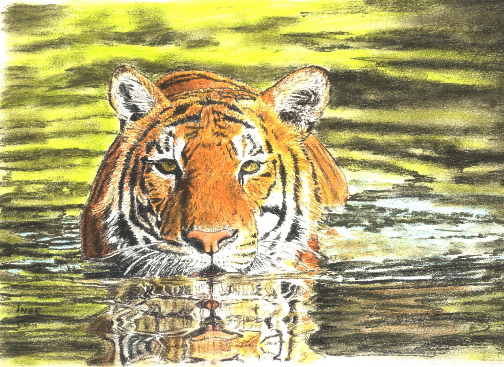 tijger-in-water